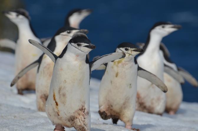 Take me to… Antarctica- Kieron's Adventure